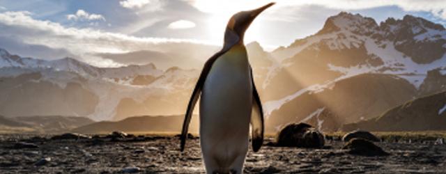 How cold is Antarctica?